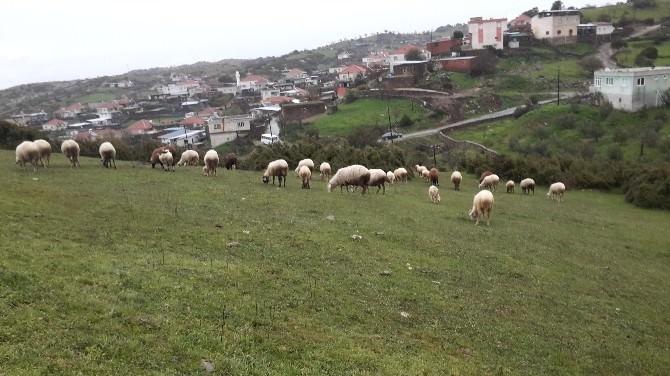 Aydın'da Kartpostallık Bahar Manzaraları