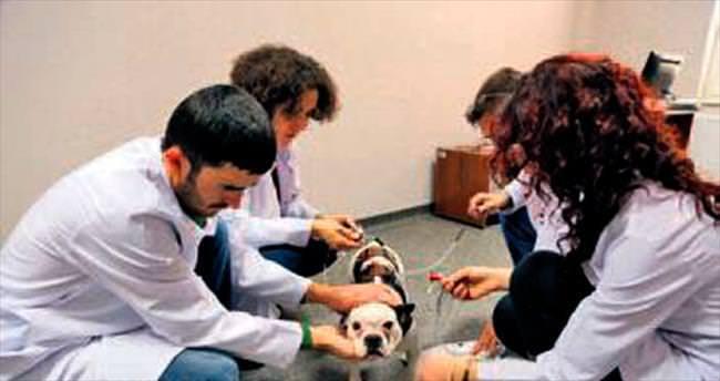İnsan-hayvan etkileşimi laboratuvarı
