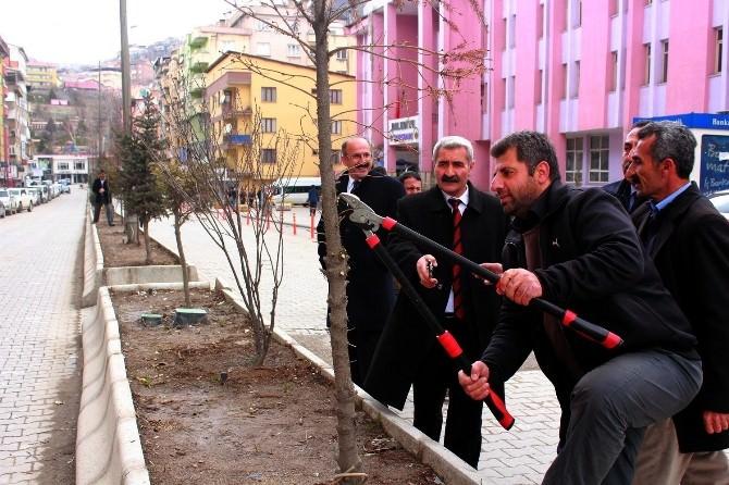 Hakkari Belediyesi'nden Ağaç Budama Çalışması