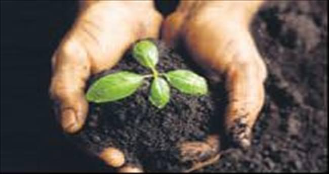 Tarım ilaçlı gıdalar erkeği kısırlaştırır