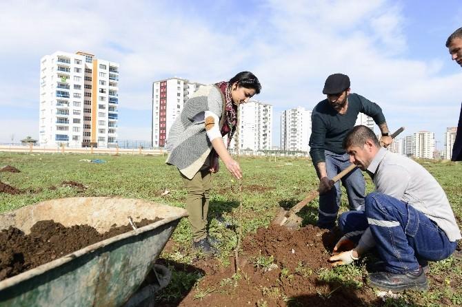 Diyarbakır Büyükşehir Belediyesi Kentin İlk Meyve Bahçesini Oluşturdu
