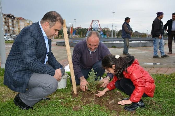 Görele Belediyesi 6 Bin Fidanı Toprakla Buluşturdu