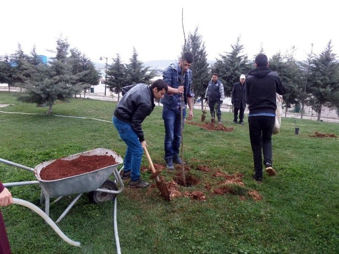 Baharı Ağaç Dikerek Karşıladılar