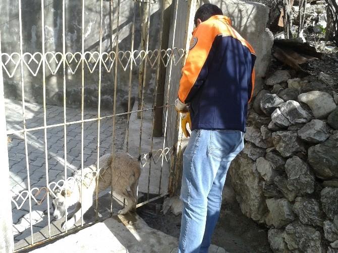 Hakkari'de Köpek Kurtarma Operasyonu