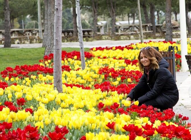 Denizli'de Park, Meydan Ve Kavşaklar Çiçek Açtı
