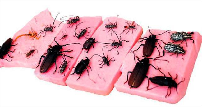 Yeni böcek türleri bulundu