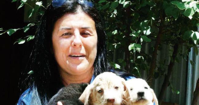 Köpeklere koruyucu aile projesi