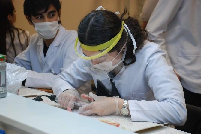 Tokat Diş Hekimliği Fakültesi Emekleme Devresini Bitirdi