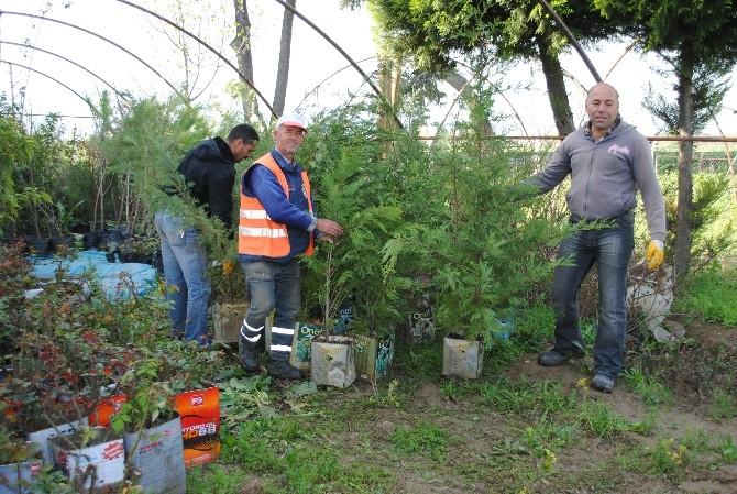 İncirliova'ya 50 Çeşit Ağaç Daha Dikiliyor