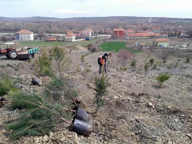 TEMA Vakfı Çiğdemli Kasabasında 250 Fidan Dikti