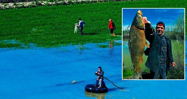 Tarlada balık avı