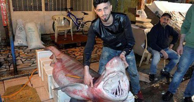 4 metre boyunda köpek balığı yakalandı