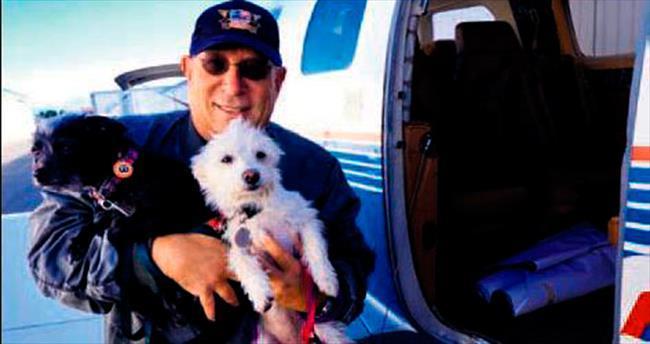 Yedi yılda 75 bin köpek kurtardılar