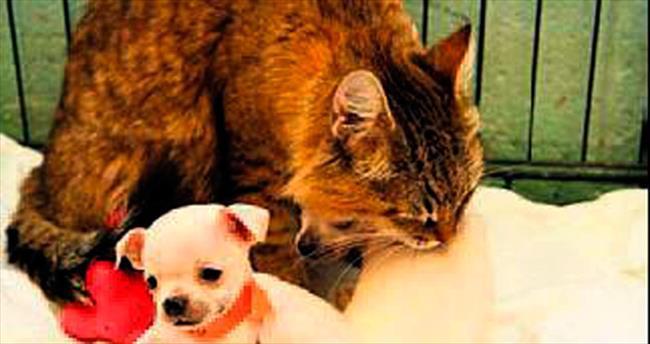 Yavru köpeklere annelik yapıyor