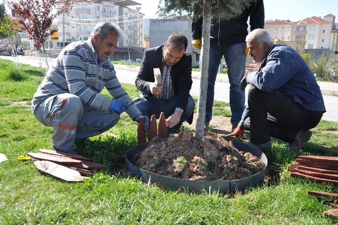 Ağaçlar Ve Refüjler Bahara Hazırlanıyor