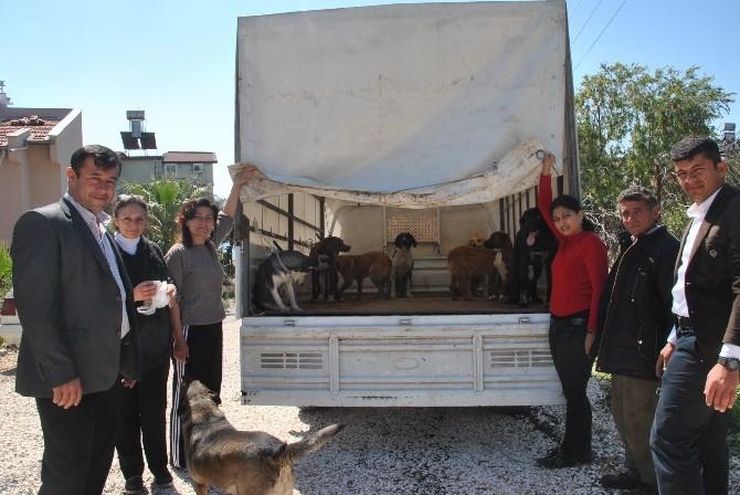 Demre'de Sokak Köpekleri Kısırlaştırıldı