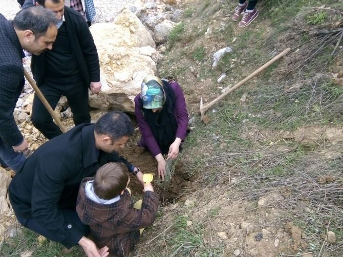 Çelikhan'da Fidan Dikim Şenliği Düzenlendi
