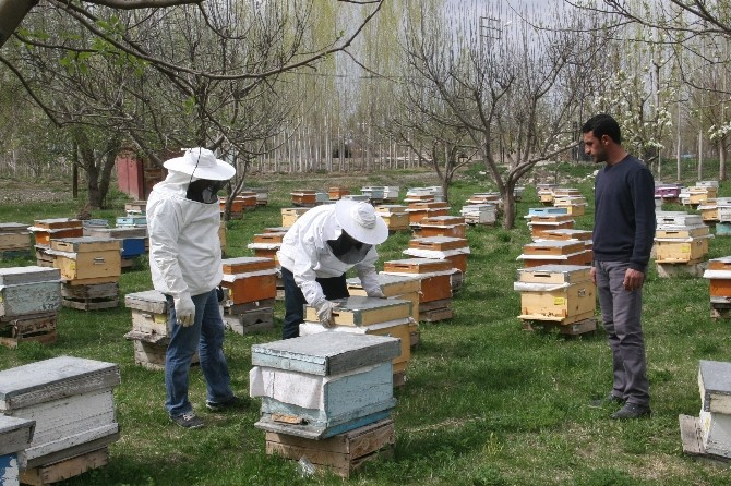 (Özel Haber) Arıcılardan İlkbahar Bakımı