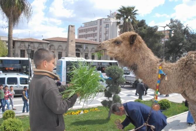 Şanlıurfa'da Develi Kermes Tanıtımı Yoğun İlgi Gördü