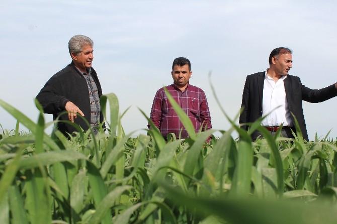 Buğdayda Pas Hastalığı Uyarısı