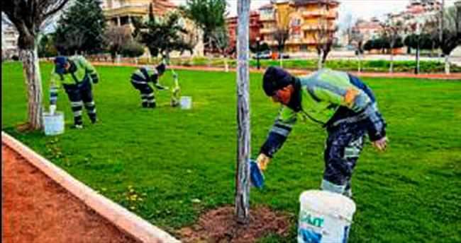 Şehitkamil'de ağaçlar korunuyor