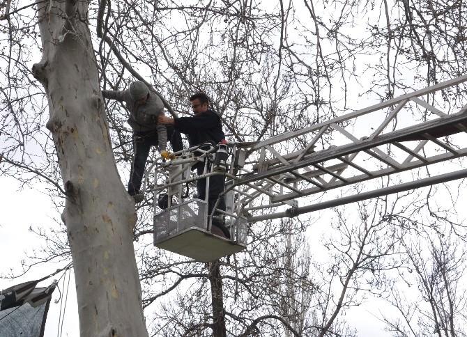 (Özel Haber) Çıktığı Ağaçtan İnemeyince Ağaçta Mahsur Kaldı