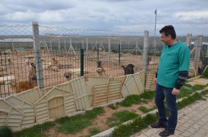 Belediye Hayvan Barınağı 250 Köpeğe Ev Sahipliği Yapıyor
