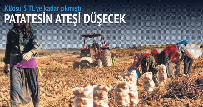 Patatesin ate�ini Adana ve �ukurova s�nd�recek