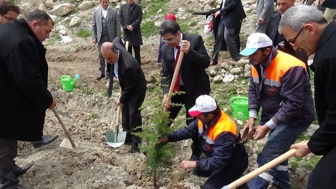 Konya'da 75 Bin Fidan Dikildi