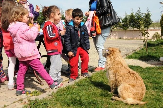 Minik Öğrenciler Geçici Bakımevindeki Hayvanlarla Dost Oldu