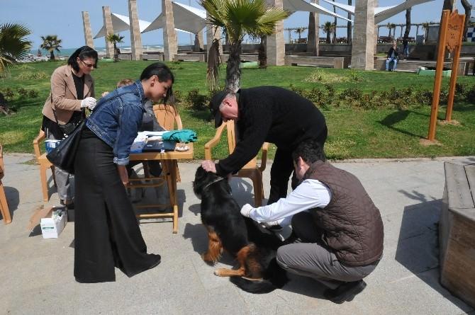 Akçakoca'da Sahipli-sahipsiz Tüm Köpekler Aşılandı