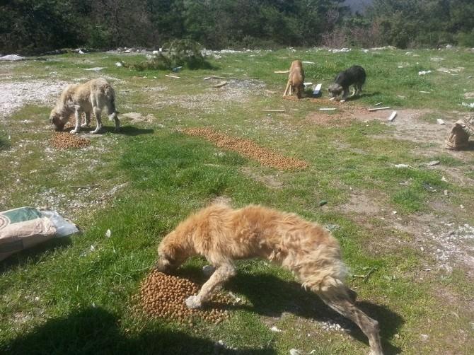 Aç Kalan Köpeklere Gönüllülerden Yiyecek Desteği
