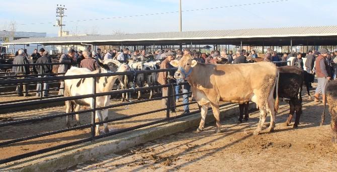 ET Ve Süt Fiyatları Arttı Hayvan Pazarı Hareketlendi
