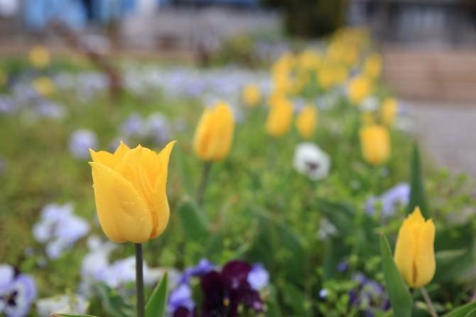 Gölbaşı Çiçekler İle Renklendi