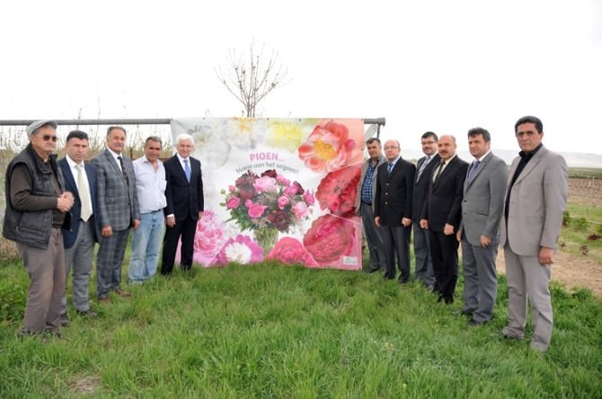 Karaman'da Şakayık Çiçeği Yetiştiriciliği