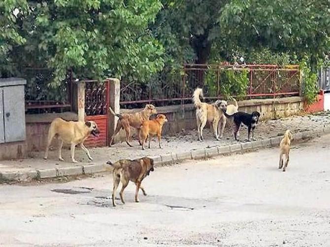 Fatsa'da Sokak Hayvanları Projesi Hayata Geçiyor