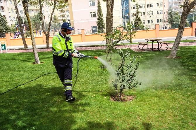 Şehitkamil Belediyesi, Ağaçlarda İlaçlama Çalışması Başlattı