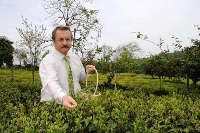 Diyarbakır Ve Mardin'de Ödüllü Çay İçme Yarışması Yapılacak