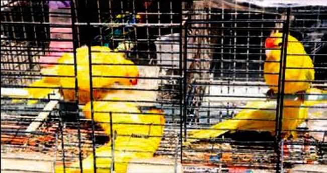 Kaçak papağan ticaretine darbe