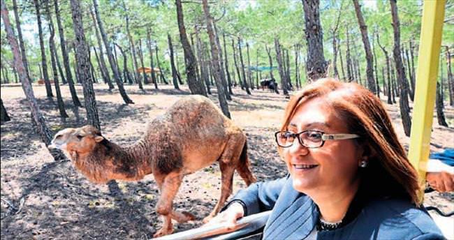 Gaziantep'te safari başladı