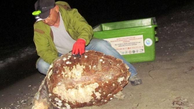 Kuşadası'nda Bir Ölü Caretta Caretta Bulundu