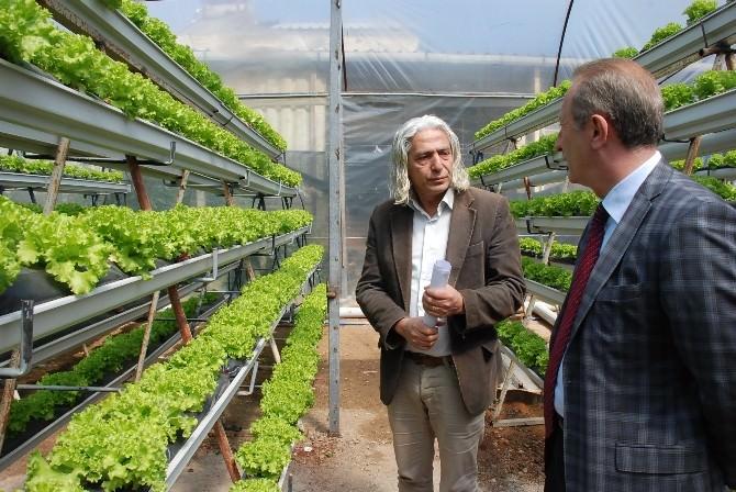 Başkan Atabay'dan Topraksız Üretim Yapan Seraya Ziyaret