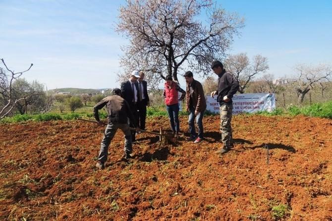 GAP'tan Siirtli Çiftçilere Destek