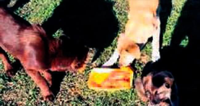 Keçiören Belediyesi sokaktaki hayvanlar için harekete geçti