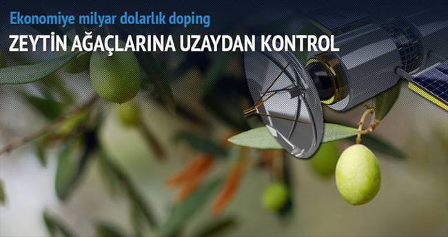 Ekonomiye milyarlık zeytin dopingi