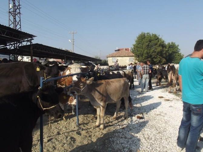 Isparta'da Kapatılan Hayvan Pazarı Kullanıma Açıldı