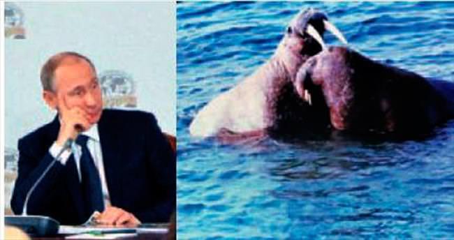 Putin denizaslanlı belgeselden sıkıldı