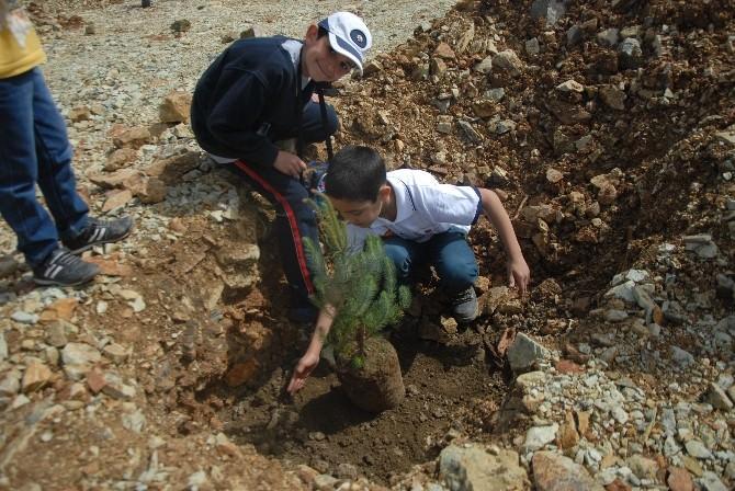Kirazlı'da Gölet Mesire Alanı Ağaçlandırıldı