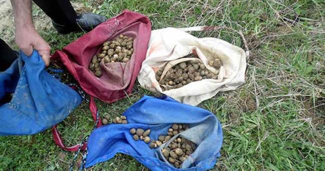 O tohumu topladılar 152 bin TL ceza yediler!