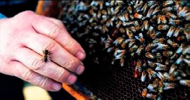 Iğdır'da bal arıları esnafa saldırdı